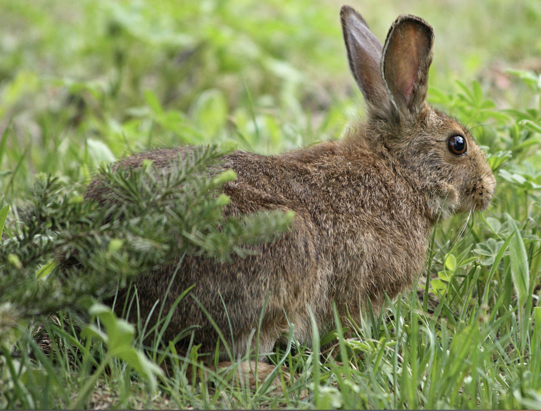Encounter with a hare