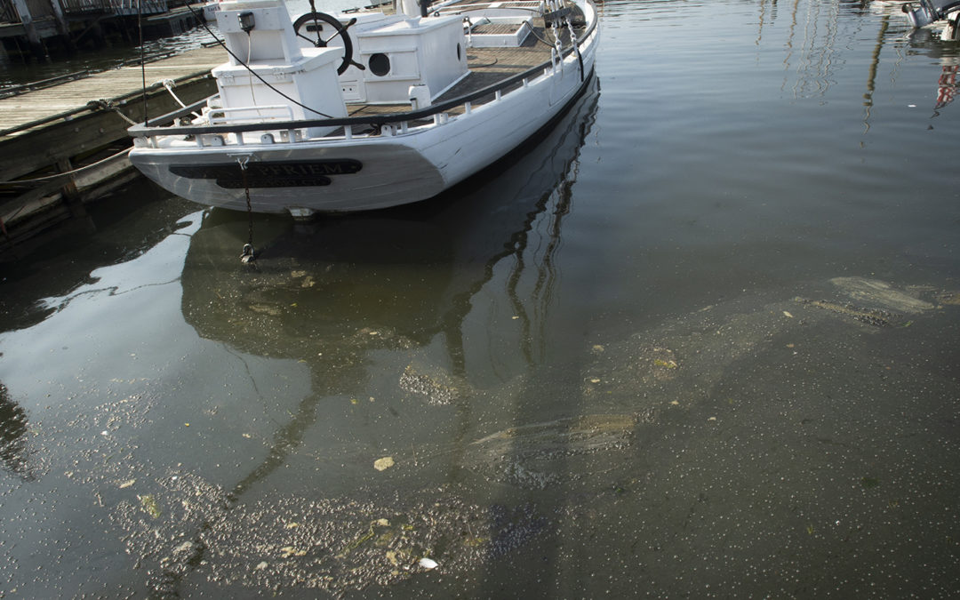 Dead Fish, Condoms, Brown Foam: Sewage Has Chokehold On Black Rock Harbor